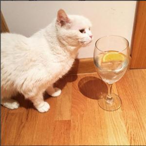 por que tengo mucha sed y no se me quita