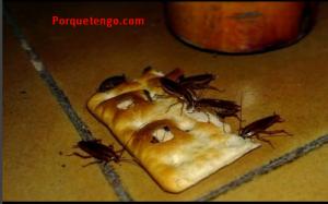 Porque Tengo Cucarachas Pequeñas En Casa