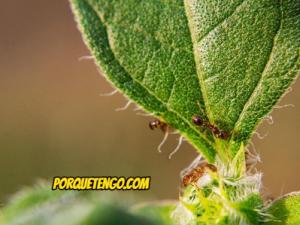 Como Matar Hormigas Negras De Jardín