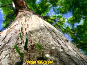 Cuál Es El Mejor Veneno Para Hormigas Del Mercado