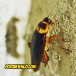 Donde Comprar Químicos Para Fumigar Cucarachas
