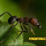 Porque Tengo Hormigas Con Alas En casa Y Como Eliminarlas