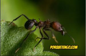Eliminar hormigas de casa stunning fumigar hormigas with - Como terminar con las hormigas en casa ...