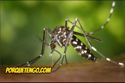 Cuál Es El Mejor Repelente Natural Para Mosquitos