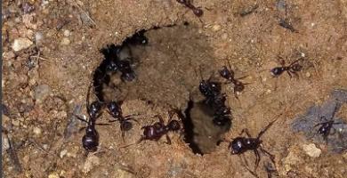 Cuáles Son Los Tipos De Hormigas Que Existen En España