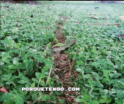 Remedios Caseros Para Hormigas En Plantas